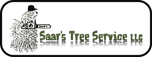 tree service clinton county pa